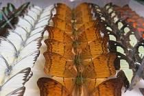 Entomologický výměnný den.