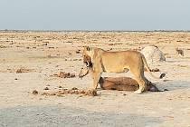 Afrika. Ilustrační foto.