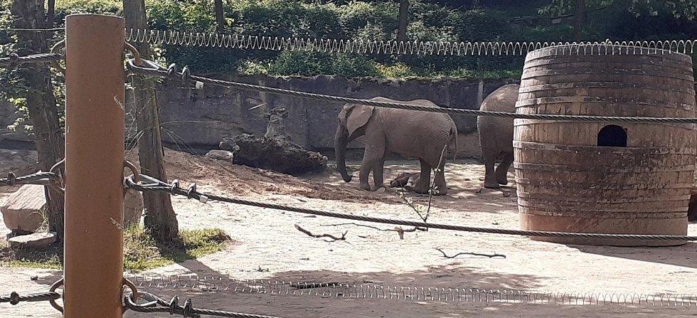 První africké slůně v Česku se narodilo v Zoo Zlín, 11. června 2021