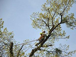 Co vlastně takový arborista dělá?