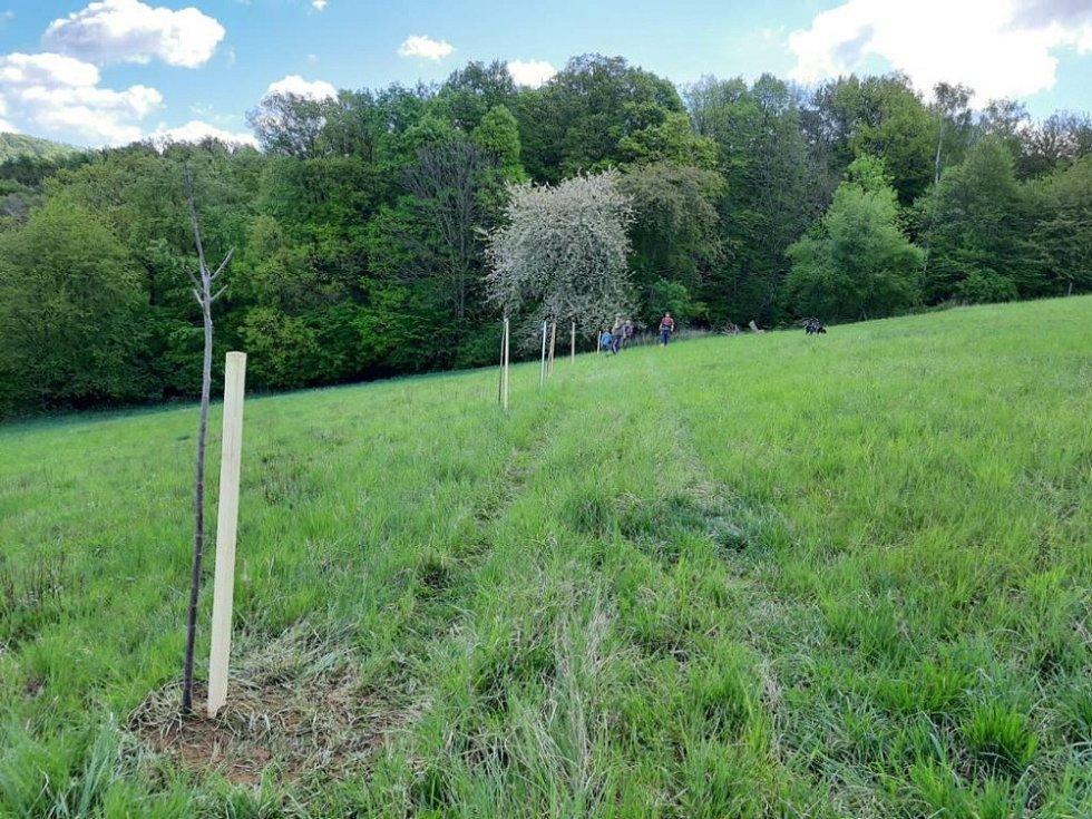 Výsadba ovocných stromů a vybudování napaječky pro zvěř.