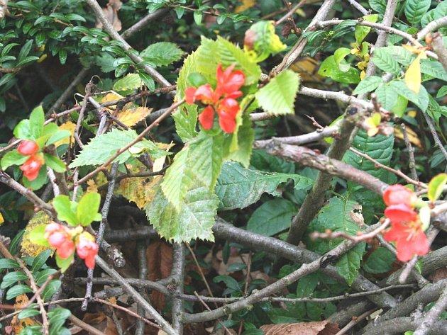 Kvetoucí vegetace na začátku listopadu