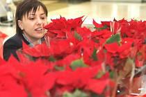 Hvězda dětem. Koupí typické vánoční rostlinky podpoříte nemocné děti
