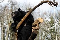 V sobotu 2. dubna se poprvé po zimní přestávce otevřel zámek Lešná. Slunečného počasí tak návštěvníci využili nejen pro návštěvu zámku, ale také tamní zoo.