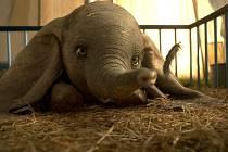 Kino Napajedla: Dumbo