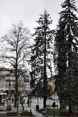Asi šestnáct metrů vysoký smrk pichlavý, který se každým rokem mění výzdobou ve vánoční strom, roste na vsetínském Dolním náměstí zhruba šest desítek let. Je tradicí, že vždy vpředvečer Štědrého dne se urozsvíceného vánočního stromu koná zpívání koled