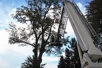 Hrozilo, že nakloněný strom spadne na silnici