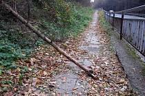 Cestou na zlínský hřbitov musí maminka s kočárem překročit padlou haluz, projít hromadou listí, menším pralesem, vyhnout se odhozeným dlažebním kostkám a balancovat na dírách.