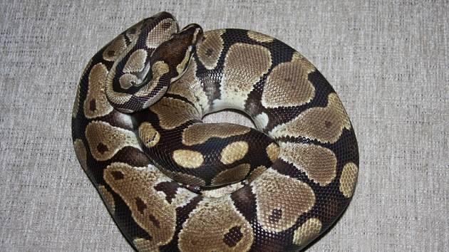 Had unikl chovateli do stoupaček bytového domu.