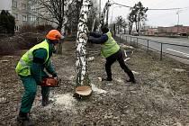 Kácení kvůli plánovanému rozšíření rychlostní komunikace I/49 ze Zlína do Otrokovic