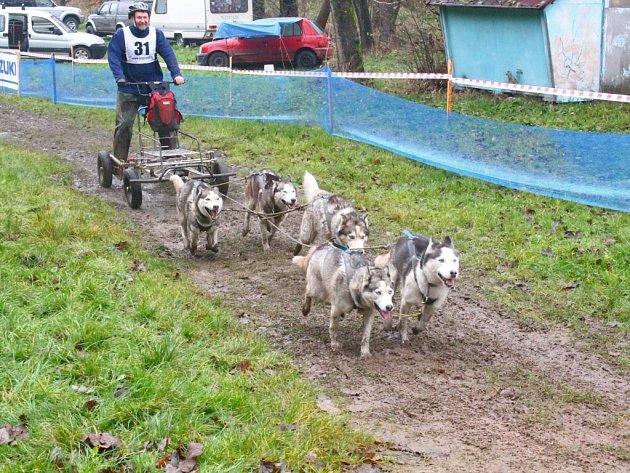 Držkovský cross-závod psích spřežení. Ilustrační foto