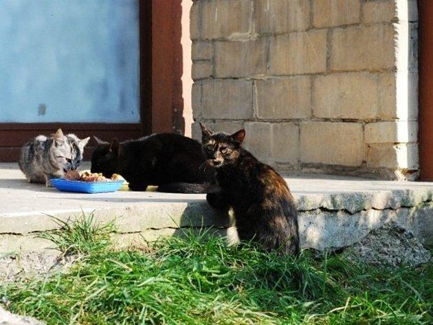 Kočky vylézající z nory