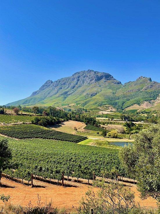Výhled na vinice a horu v Jižní Africe.