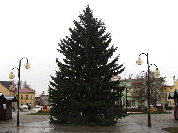 Holešovský strom pochází zvlastních zdrojů města. Tentokrát ho na náměstí přivezli ze sídliště Letiště. Smrk posetý šiškami a světélky je vysoký asi deset metrů.
