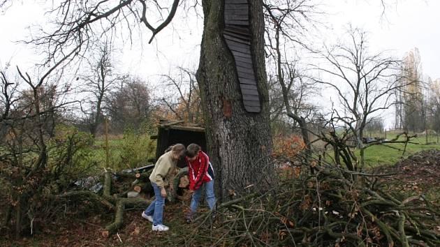 Michaela a Barbora Andersovy jsou rády, že oskeruše na jejich zahradě je zakonzervovaná.