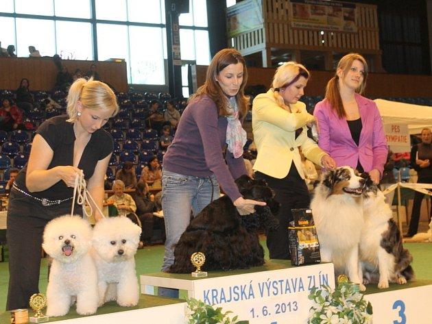 Krajská výstava psů ve Zlíně.