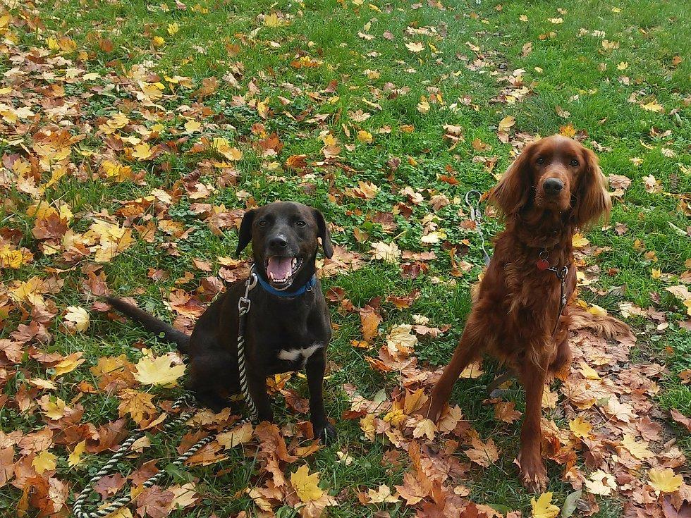 Svěřenec Justy vlevo a vlastní Tina