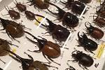 Na Entomologickou výstavu v Otrokovicích přišlo asi 1500 milovníků hmyzu a chovatelů