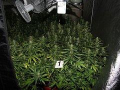 Policie odhalila pěstírnu marihuany, která fungovala ve dvou místnostech bývalé vinárny poblíž centra Zlína.