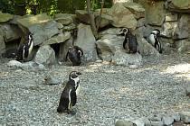 Expozice tučňáků ve zlínské zoo.