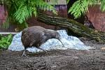 Zlínská zoo letos poprvé nabídne ranní procházku areálem zoo s návštěvou kiviho.