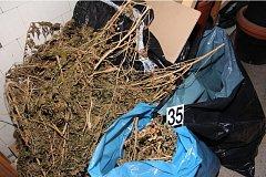 Zlínští policisté dopadli pěstitele konopí.