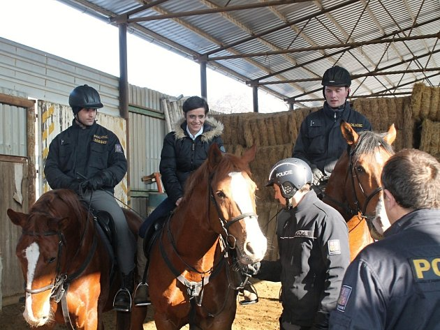 Jízdní policie koně cvičí, aby byli připraveni na hlídkování v ulicích. Ty luhačovické střeží ze sedel policejní jezdkyně, zatímco na skupinový trénink dohlíží vedoucí hipologického oddělení Bohumil Miklas.