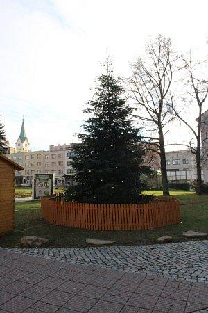Jedli kavkazskou nechalo město před čtyřmi roky vysadit. Kvůli Vánocům nechtělo nechat kácet živé krásné stromy. Odpadla díky tomu také manipulace spřevozem stromu, jeho ukotvením a dovozem. Měří zhruba dvanáct metrů.