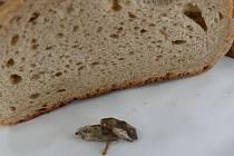 Myši zapečené v chlebě