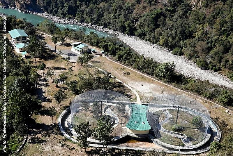Ohrožená volavka císařská je na pokraji vyhubení. Poslední informace hovoří pouze o 60 jedincích pozorovaných v Bhútánu, Indii, Číně a Maynmaru.