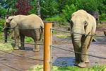 Ve zlínské zoo oslavili kulaté narozeniny jejich nejmladší slonice.