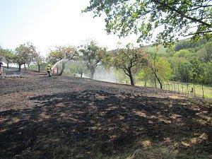 Požár trávy poškodil několik ovocných stromů