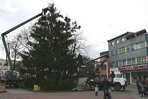 Příprava vánočního stromu na oficiální rozsvícení.