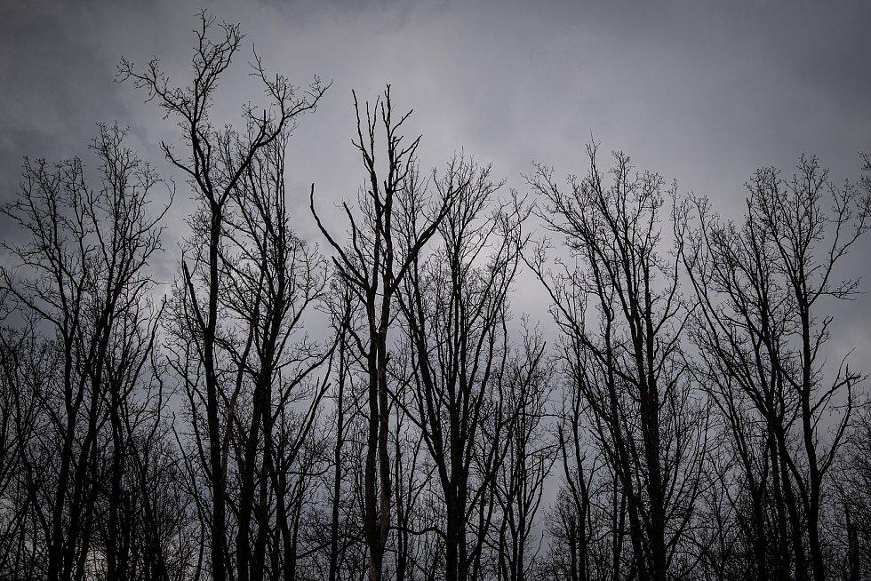 V okolí zničených areálu jsou i na stromech znát následky exploze, 3. května 2021. Ve Vrběticích v roce 2014 explodoval muniční sklad. Po sedmi letech vyšlo najevo podezření na zapojení ruské tajné služby (GRU a SVR) do výbuchu.