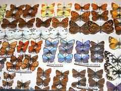 Entomologická burza a výstava v napajedelské sokolovně
