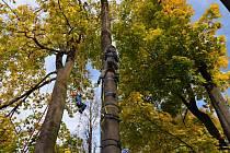 Stromové slavnosti.