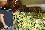 Pěstírna marihuany v rodinném domku v Křekově na Valašskokloboucku