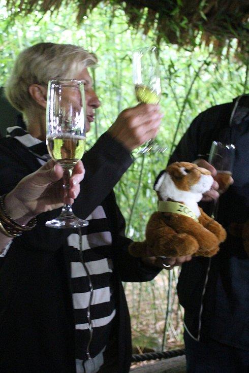 Ve zlínské zoo pokřtili mláďata tygra ussurijského.