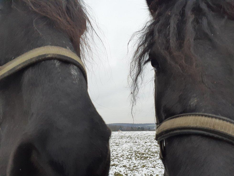 Farma Žlutava. Dozor nad koňmi je zde stále, i v noci.
