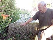 František Malota ze Zlína musí vykopat a vyhodit přes 40 let starý živý plot - zlikvidoval ho zavíječ...