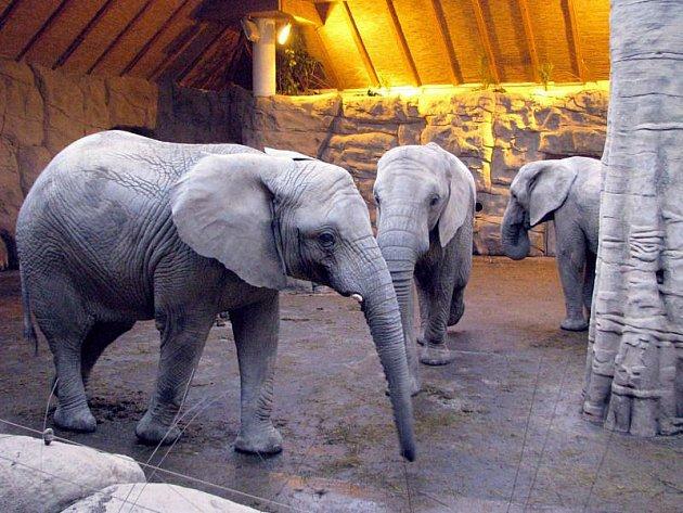 Expozice slonů v zoo Lešná.
