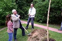 Sázení festivalového stromu