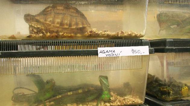 NĚKOLIK STOVEK I TISÍC. Ceny za pořízení hada, želvy, ještěrky nebo pavouka se různí