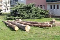 V ulicích Husova, Milíčova a Chelčického už padla k zemi celkově šedesátka stromů.