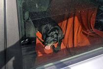 Pes v rozpáleném vozidle ve Zlíně. Kolemjdoucí se jej snažil zachránit.