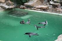Trojicí opičích miminek a třemi mláďaty tučňáků se může pochlubit zlínská zoologická zahrada.