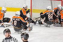 Sledge hokejisté SHK Lapp Zlín . Ilustrační foto