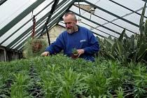 Pěstitelé jarních rostlinek a vášniví zahrádkáři se mohou radovat. Blíží se jaro a sním i nutnost zasadit do květináčů a truhlíků nové rostlinky.