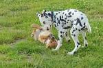 Na cvičišti za domem si mohou psi neomezeně hrát i běhat.