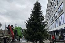 K Obchodnímu domu Zlín přivezli vánoční strom.